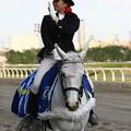 写真: 川崎競馬の誘導馬05月開催 こいのぼり青Ver-120514-07-large