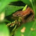 Photos: 森の小窓の向こうに2012.07.01屋敷森跡