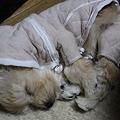 写真: 寝間着 完成形態