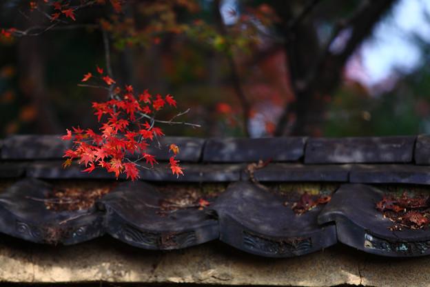 写真: 『日本の秋。。。』
