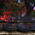 『日本の秋。。。』