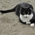 写真: 猫と遊ぶ(4)