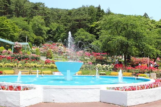 Photos: 花巻温泉バラ園・5