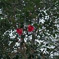 Photos: Flower04092012dp2-05