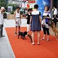 Photos: 百貨店前で戯れる犬さん