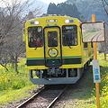 いすみ鉄道 ムーミン列車1