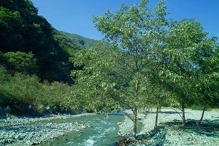 大鹿村の川辺5(SDIM0179)
