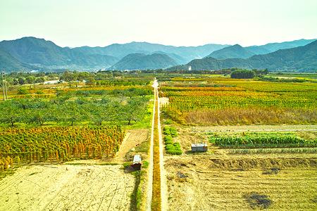 皆神山につづくみちstandard(SDIM0221c)