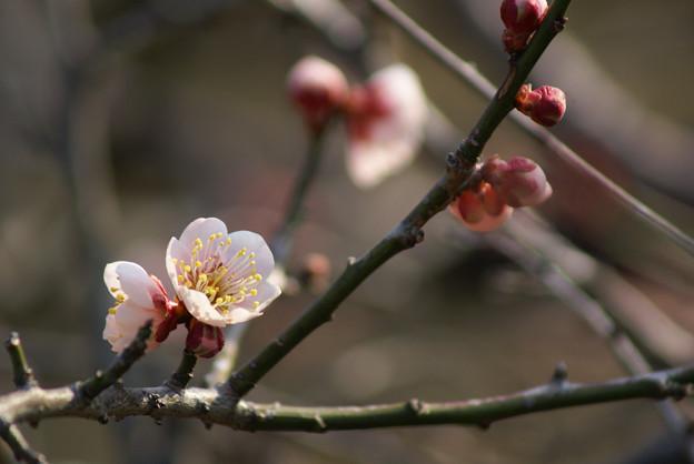 Photos: やっと咲きました