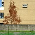 Photos: 塀の向こうの木