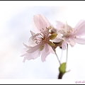 Photos: 桜色の秋