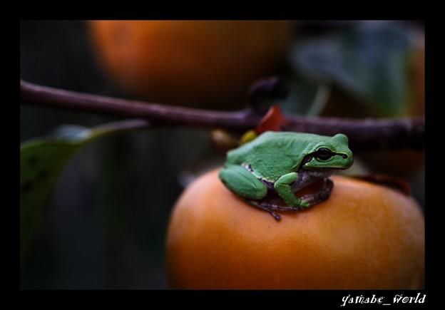 Photos: 深まる秋に