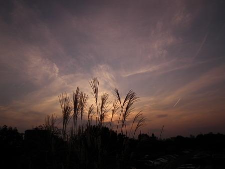 昭和記念公園 755