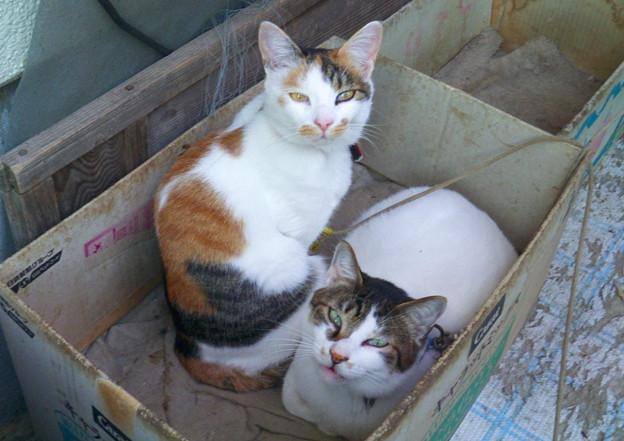 猫団子【屋外編】