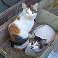 Photos: 猫団子【屋外編】