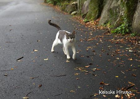 箱根の猫さん