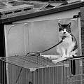 Photos: 繋がれた猫