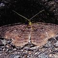 写真: yamanao999_insect2011_327
