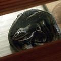 ふれあい館のヘビ