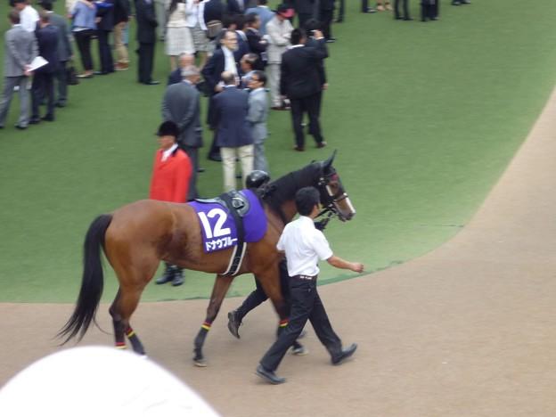 2012安田記念 ドナウブルー