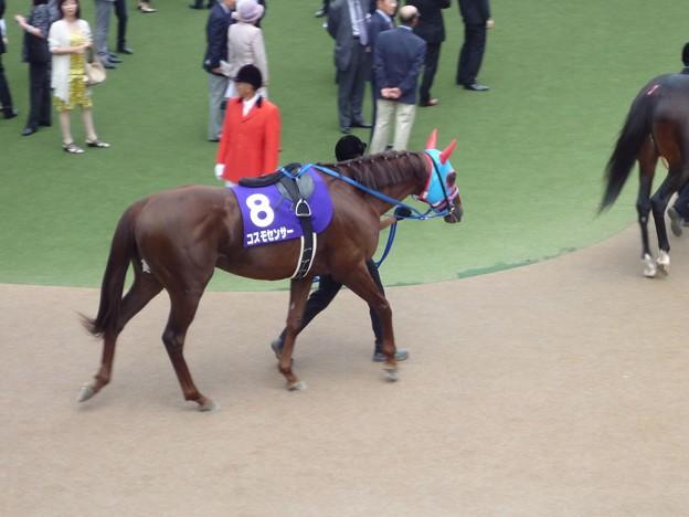 Photos: 2012安田記念 コスモセンサー