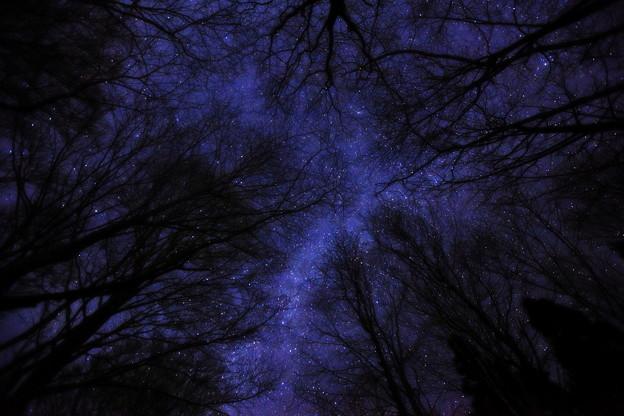 銀河の森を見上げて