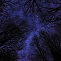 Photos: 銀河の森を見上げて