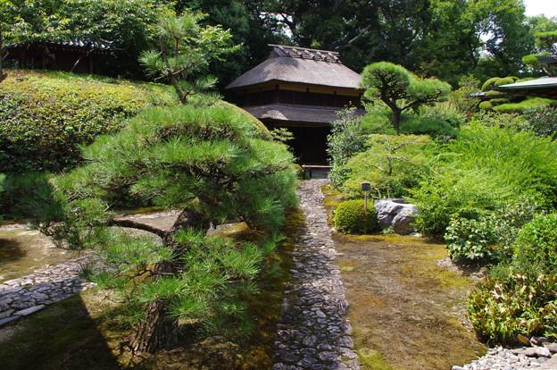 慈光院庭園