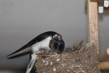 巣のお掃除