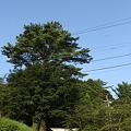 皇子原神社