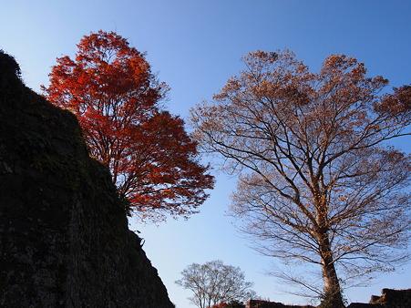2011 岡城 紅葉