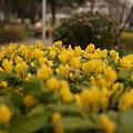 Photos: 春の陽