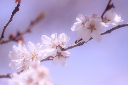 四季桜も咲いてます~~
