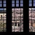 写真: 京都府庁・旧本館16