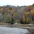 写真: Fall Colors with Birches 10-12-11