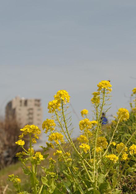春の陽気 (6) 2011年 3月