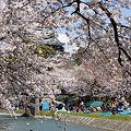 Photos: 桜とお城とカヌー