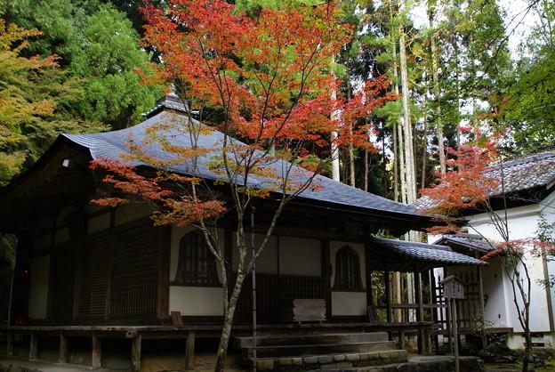 Photos: 高山寺 開山堂の紅葉_04