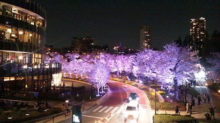 桜通ライトアップ