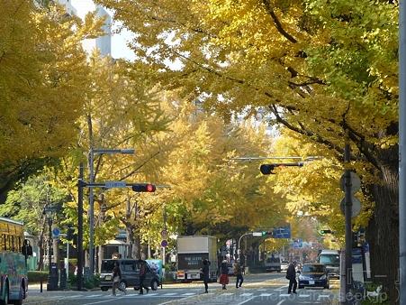 111130-横浜 紅葉  山下公園通り (21)