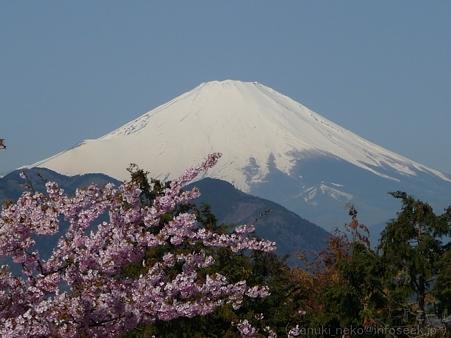 120329-松田山から富士山 (5)