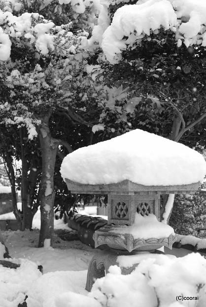写真: 綿帽子