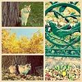 写真: 秋の公園で…