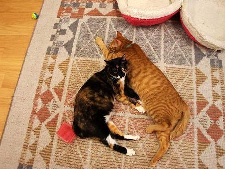 ディス(右)にくっついて寝るココ(左)
