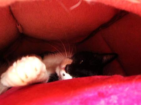 ベッドに潜むロビン