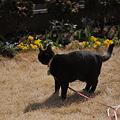 写真: うきうき黒猫