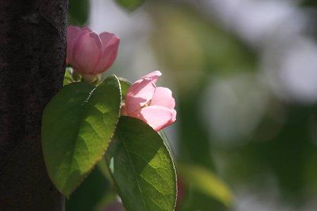 2012.04.24 和泉川 カリン