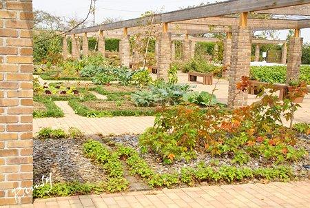 花菜ガーデン・・23