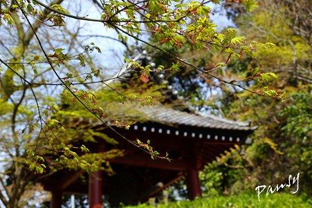 緑と・・鐘楼・・桜 kamakura 116