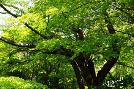 green..8